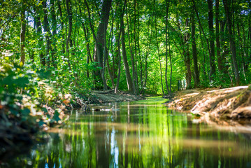 small river through a forest with a path