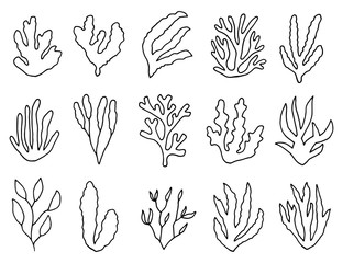 algae outline isolated plants. linear drawing set of objects