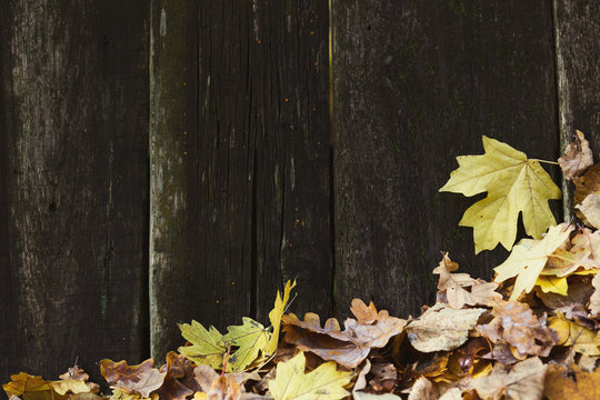 Fallen autumn leaves covering old wooden planks