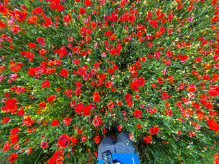 View from above on a red poppy flower field with a man with a camera in spring