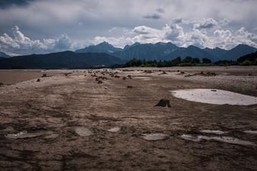Baumstümpfe auf dem Grund des abgelassenen Forggensees