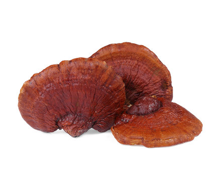 Lingzhi Mushroom Ganoderma Lucidum Isolated on white background.