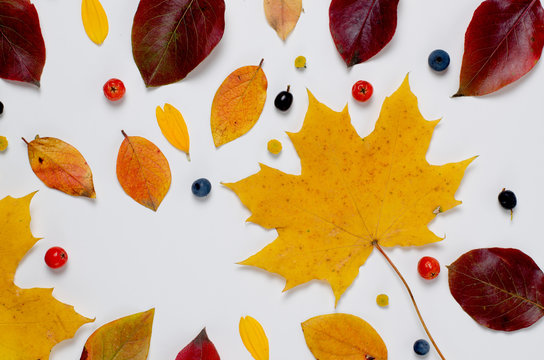 Autumn Composition of vibrant red and yellow leaves and orange pumpkin on a white background. Flat lay Top view trendy background.