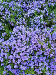 purple flower bed