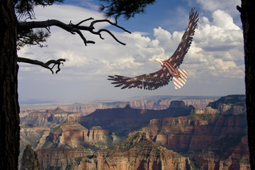 Wall Mural - Eagle of Freedom
