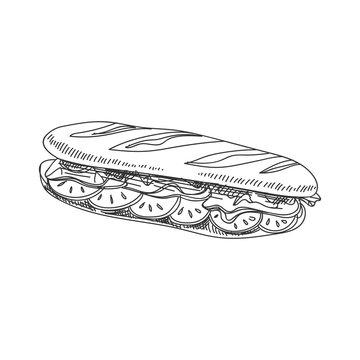 vector hand drawn sandwich baguette Illustration