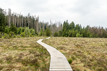 """Board Walk in bog """"Grosses Torfhausmoor"""", National Park of the Harz Mountains, Germany"""