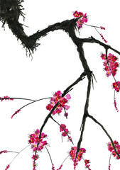 A branch of a blossoming tree. Pink flowers of sakura . Watercolor and ink illustration in style sumi-e, u-sin. Oriental traditional painting.  Isolated on white background.