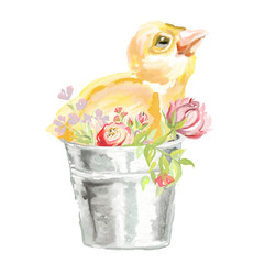 Cute watercolor baby chicken in the bucket with flowers