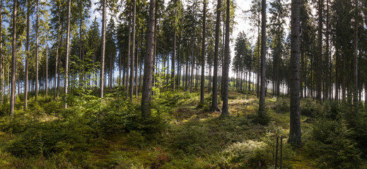 Waldlandschaft. Panorama. Beautiful forest landscape.