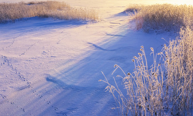 Snow and frosted reeds. Low angle sun casting shadows.