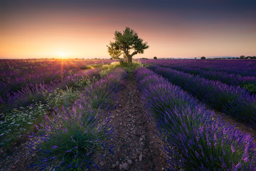 Photo Blinds Lavender Coucher de soleil sur un champ de lavande en provence