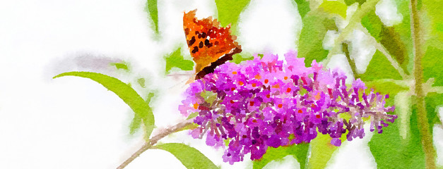 Watercolour painting of Comma butterfly feeding on a pink Buddleia flower. Banner shape with white background and green foliage.