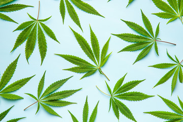 Green cannabis leaves.