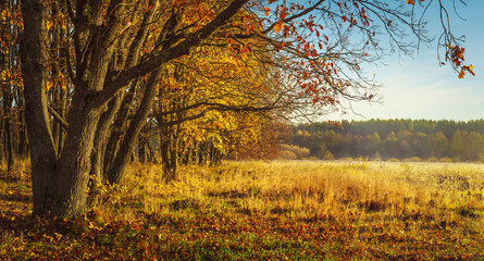 Autumn nature background. Colorful trees on golden meadow. Red and yellow foliage. Scenic nature. Fall.