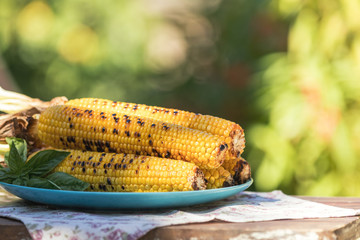 Corn baked in olive oil, with pepper, salt and basil on blue dish. Tasty grilled corn cobs on old table in the open air.