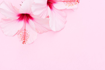 Wellness background with two hibiscus flowers on pink