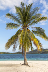 Beautiful palm tree in sunny beach and sea scenery