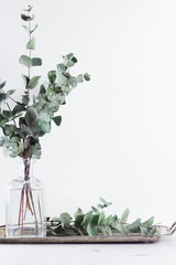 White room interior decor details with greenery of eucaliptus