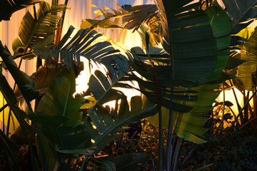 palms and design, exotic trees with yellow backlighting in the evening