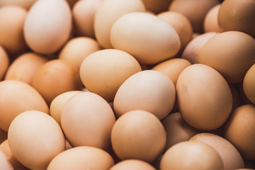 Lots of Brown Chicken Eggs