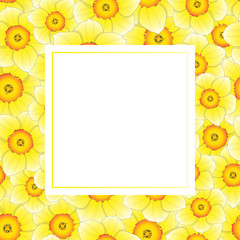 Yellow Daffodil - Narcissus Banner Card