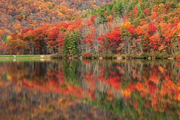 Aluminium Prints Autumn Vibrant autumn scene & water reflections along Sherando Lake within the George Washington National Forest near Lyndhurst, Virginia (USA).