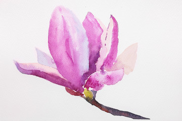 Watercolor illustration of hand painted seamless magnolia pattern