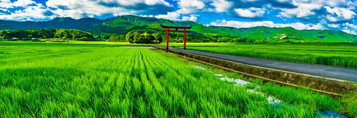 真夏、田んぼと鎮守の森 Fototapete