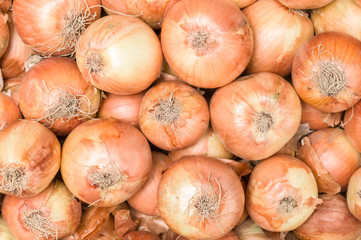 Fresh onions. Onions background.