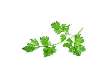 Fresh green parsley isolated