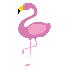 exotic bird flamingo natural