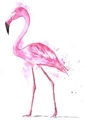 Pink flamingo - watercolor