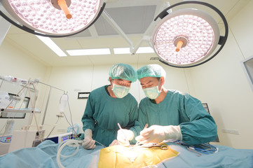 two of veterinarian surgery in operation room
