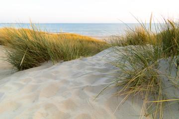 Dünenlandschaft, Düne, am Meer, Zeeland, Niederlande
