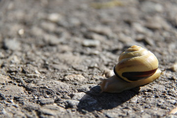 Snail in Switzerland