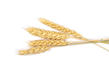Dry wheat ears, grain isolated on white background, top view