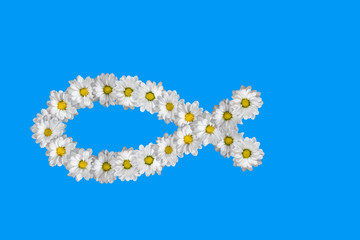 Fish - christian symbol, made of white daisies.