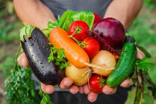 homemade vegetables in the hands of men. harvest. selective focus.