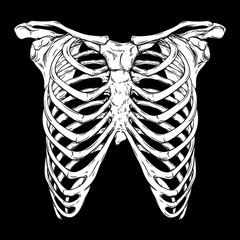Human ribcage hand drawn line art anatomically correct. White over black background vector illustration. Print design for t-shirt or halloween costume.