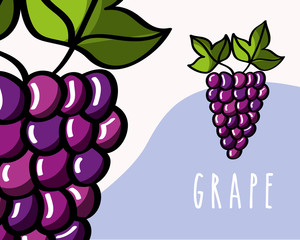 grapes fruit tropical fresh natural on colored background vector illustration