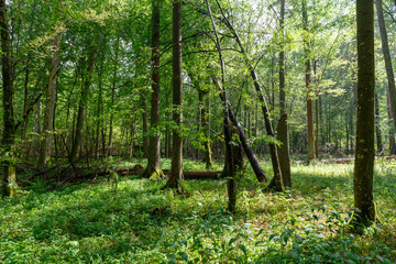 Summertime midday deciduous forest