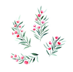 twigs with red flowers, botanical watercolor elements for design