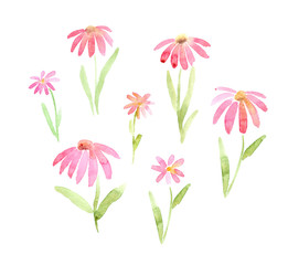 transparent pink  flowers like daisy or gerbera watercolor set