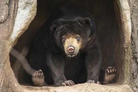 bear on cave