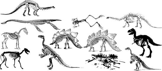 恐竜の化石のシルエット
