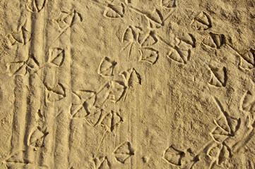 Seagulls traces on the sand, seashore, summer