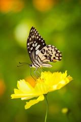 Beautiful butterfly on flower in garden