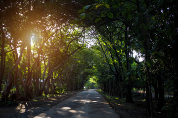 Tunnel of tree with road in thailand