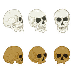 Vector Set of Cartoon Human Skull. Headbones Collection.
